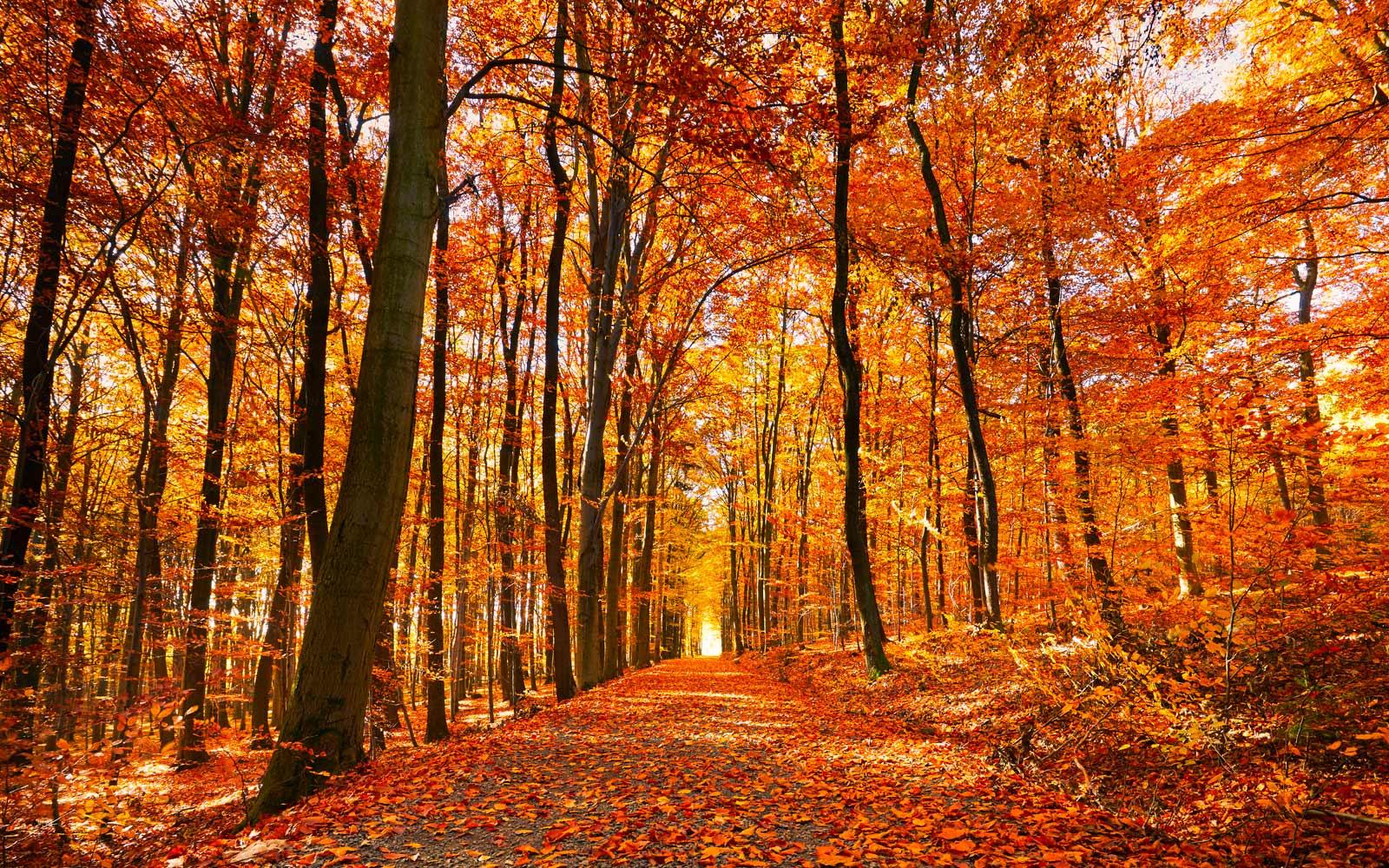 Autumn Visualisation